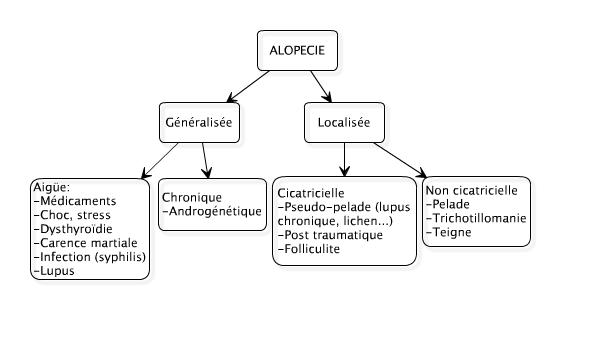 alopeciediagramme
